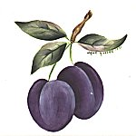 small plum.jpg (6169 bytes)