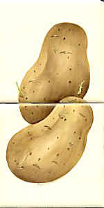 small potatoes.jpg (9703 bytes)
