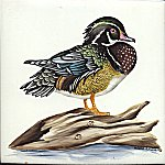 small wood duck.jpg (9564 bytes)